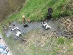 Französische-Bulldoggen-Treffen in NRW: Ruhrgebiet / Dortmund