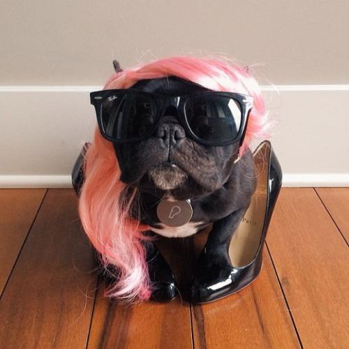 bulldogge kostüm
