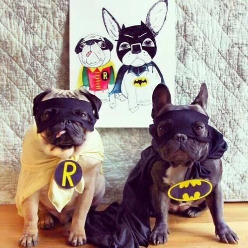 Bulldogge kostüm weheartitcom