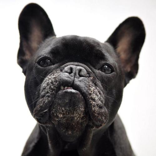 dogsandpupsdaily