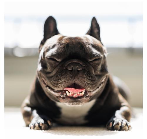 smilingdoggies