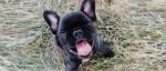Bilderstrecke: Bulldoggen Smiles – Zehn tierische Lächeln
